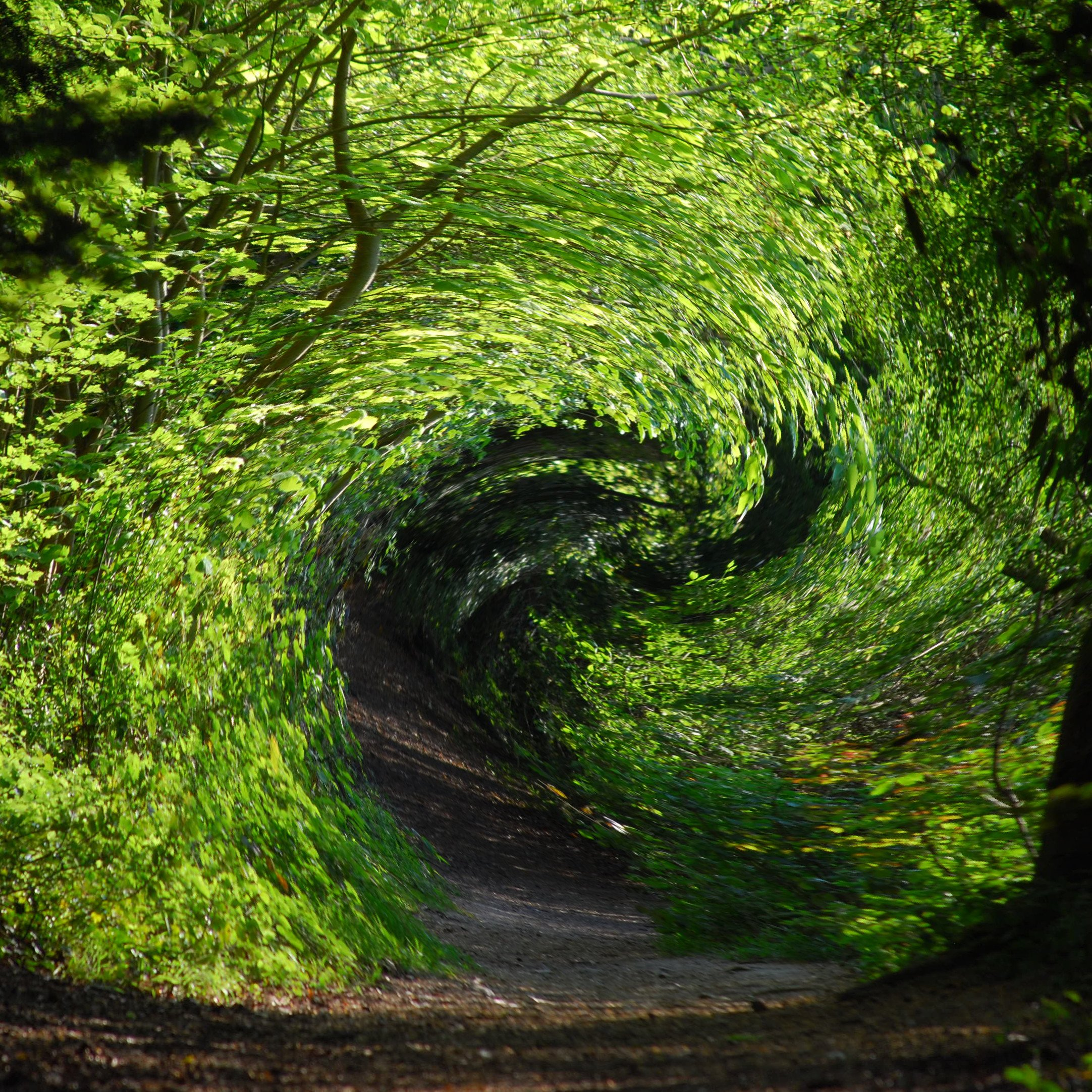 Green magic shown as swirling woods