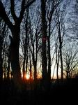 Winter Solstice sunrise at Bat Flicker woods