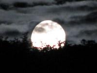 Lammas Moon- (c) Matthew Holbrook
