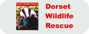 Dorset Wildlife Rescue