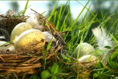 Painted eggs in a nest