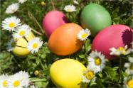 Painted eggs amongst daisies