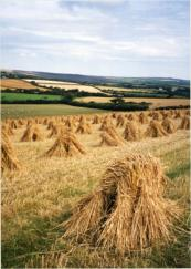 Stooks (c) Cornmother